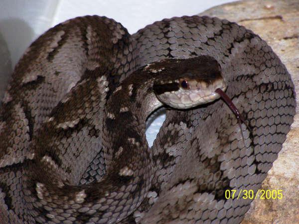 万蛇之王:荣登食物链顶端的蛇类