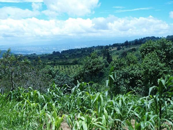 gibsoni habitat, near Antigua, Guatemala