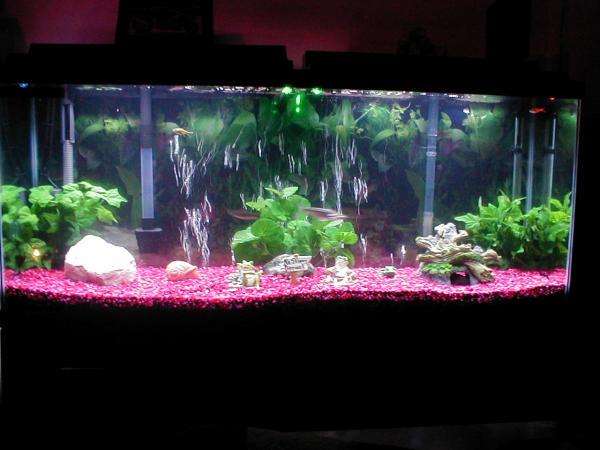 55 gal fresh water tank