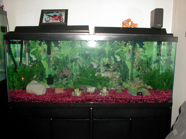 My 55 gal fresh water tank