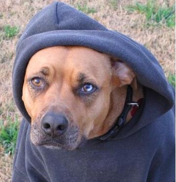Sybil wearing her hoodie