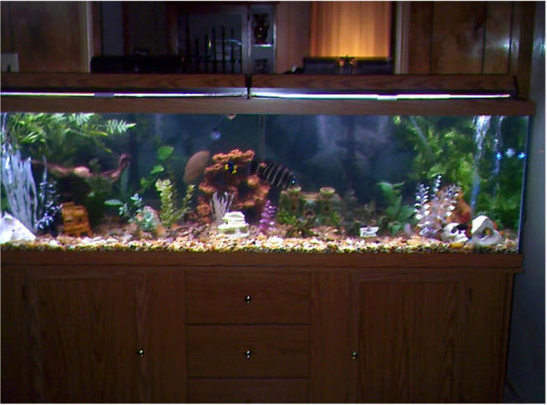 Photo gallery aquaria displays setups for 60 gallon fish tank stand