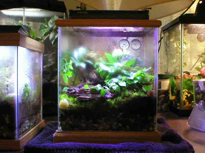 kingsnake.com photo gallery > Cages, Terrariums, Ponds ... 10 Gallon Dart Frog Vivarium