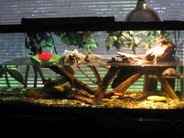 Description: Here is a full view of my turtle terrarium. I have since ...