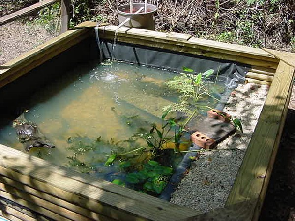 Image gallery homemade turtle pond for Homemade koi pond