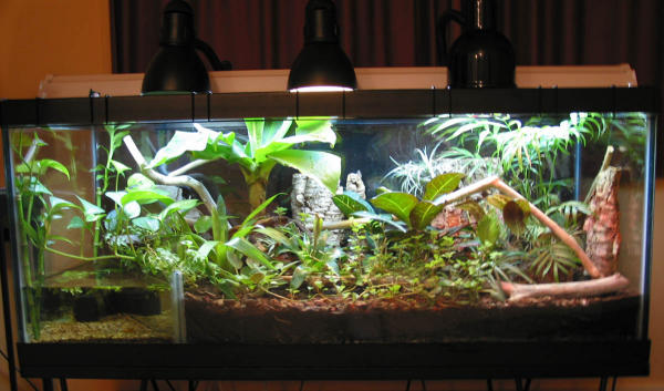 Kingsnake Com Photo Gallery Gt Cages Terrariums Ponds