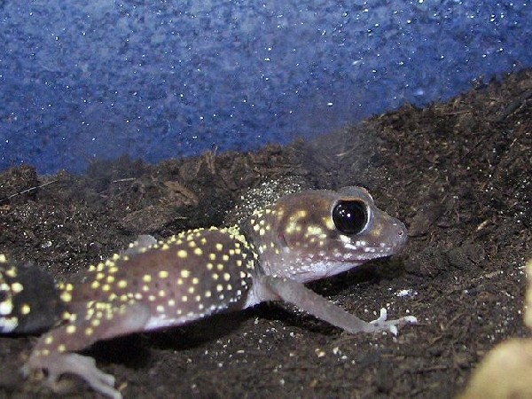 Photo: Gecko