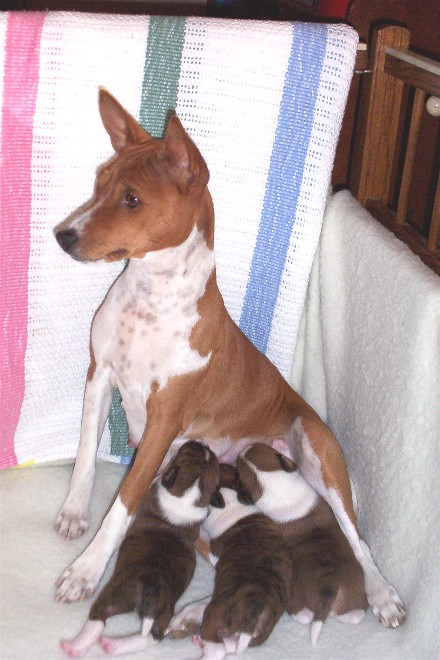 Pie & Pups