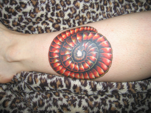 Connected by petsphoto gallery millipedes fire for Hallowed ground tattoo