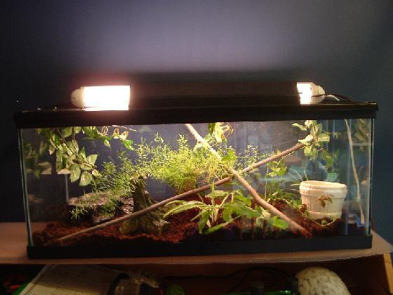 Description: Heres my rough green snakes tank(Hes been upgraded fro...