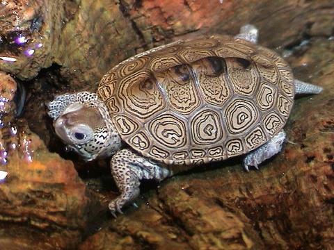 Turtle images/sea/teenage/river/pics/wikipedia/ hatching/care of/feed