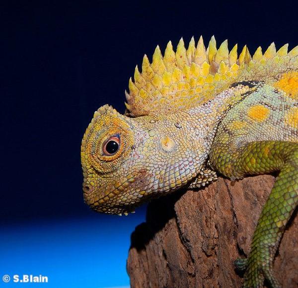 lizard essay