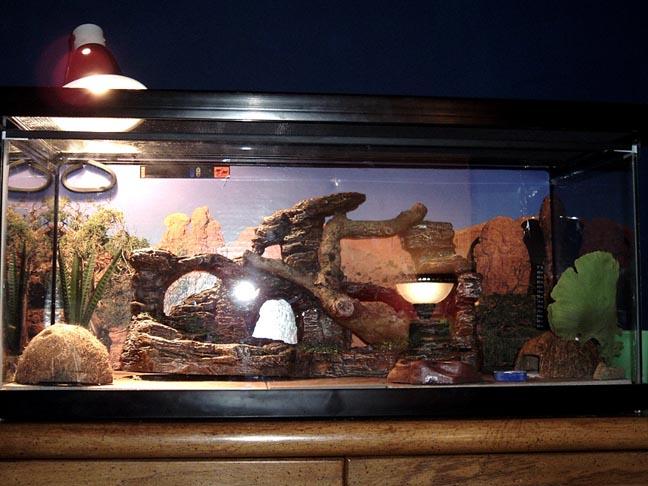 Herpforum help me find my lost leopard gecko - Decor fond terrarium desertique ...