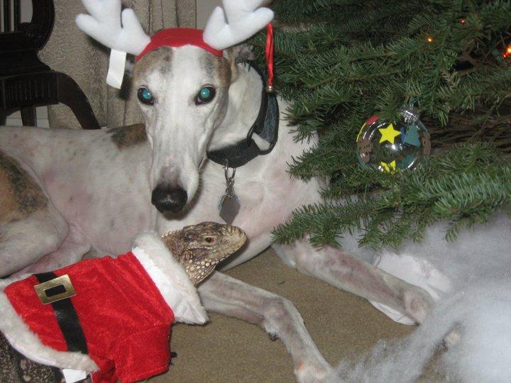 Christmas Kismet and her Reindeer