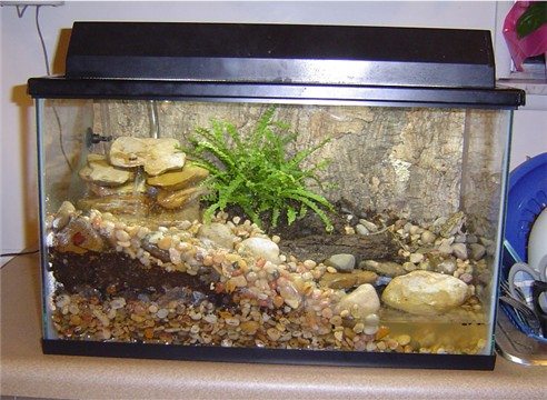 kingsnake.com photo gallery > Toads > Fowler's Toad Vivarium 10 Gallon Vivarium