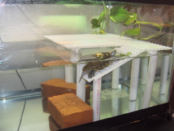Turtle tank basking ideas tank basking platform indoor setups aquariums and tubs turtle 2017 Diy indoor turtle pond