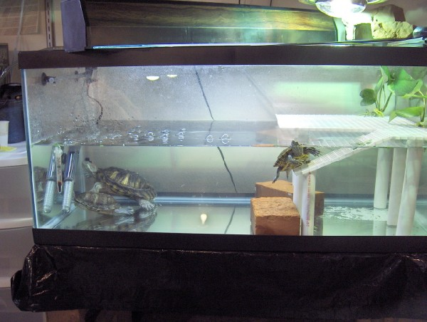 Red Eared Slider Tank Decorations And fish in turtles tank