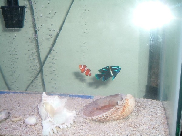 Nemo and Dorie