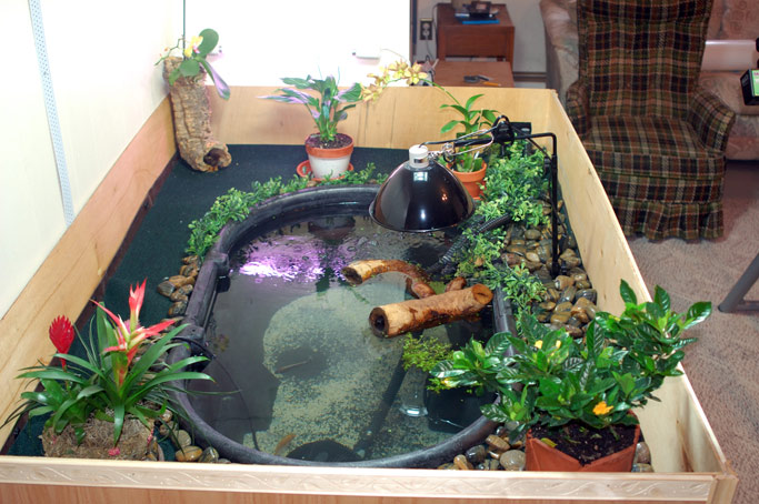 Photo gallery member galleries 100 for Koi pond setup