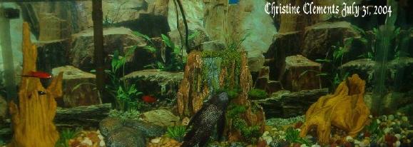 My old fish tank.