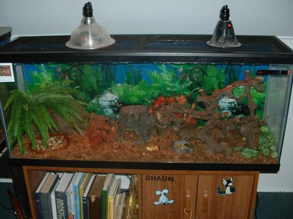 Lobster roach tank