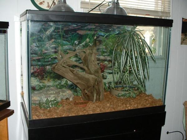 Cave roach tank