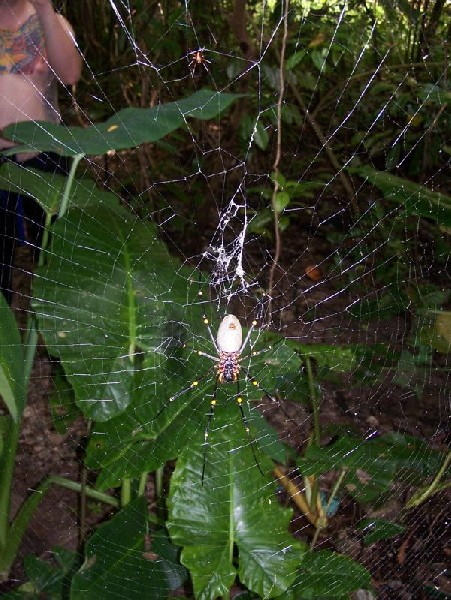 Large Spider3