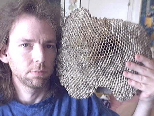 ENORMOUS RED WASP NEST