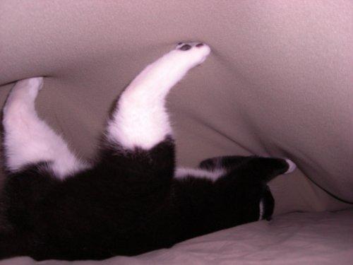 Chloe under covers