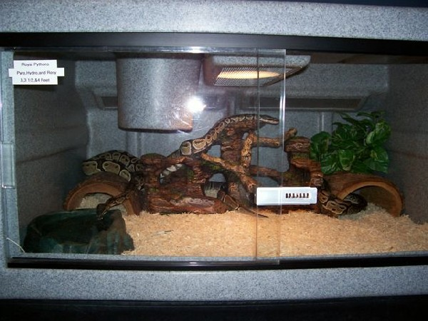 Iherp Answers Decoration Idea S For Bp S Tank
