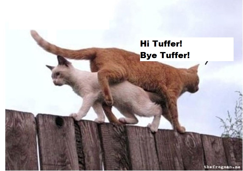 Hi/Bye Tuffer