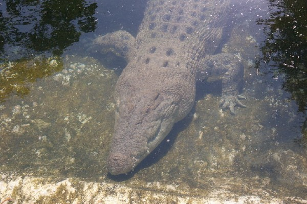 kingsnake.com visits the St. Augustine Alligator Farm during NRBE 2009, St.