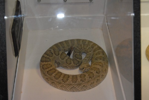 Biology of the Rattlesnakes 2011
