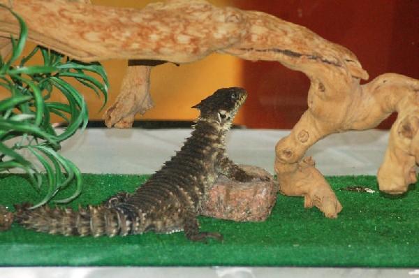 Reptilefest 2011
