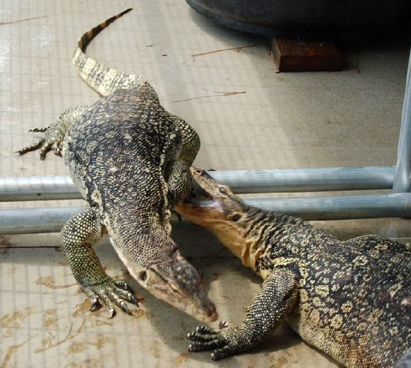water monitor introduction