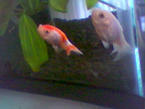 Donnie And Marsha