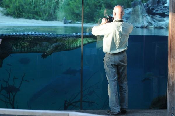 Aquarium zoo near me di dubai aquarium underwater zoo for Fish tank cleaning service near me