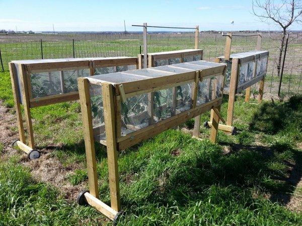 Chameleon Cages Outside