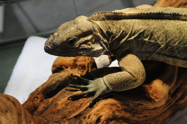 IRCF Booth at Reptile Super Show Jan 9-10, 2010 Los Angeles County Fairplex