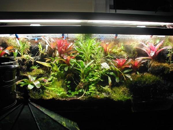 kingsnake.com photo gallery > Arrow Frogs > 75 gal pumilio ... 10 Gallon Paludarium
