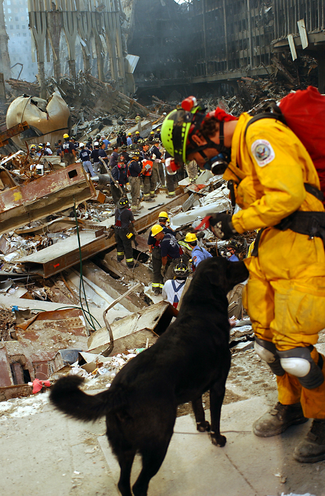 New York City, NY, September 15, 2001 -- Urban Search and Rescue teams work with their dogs to uncover victims of 9/11 -- Photo by Andrea Booher/ FEMA News Photo
