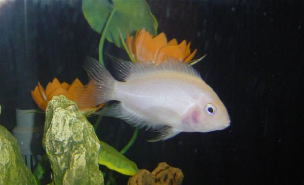 What type of fish is this?