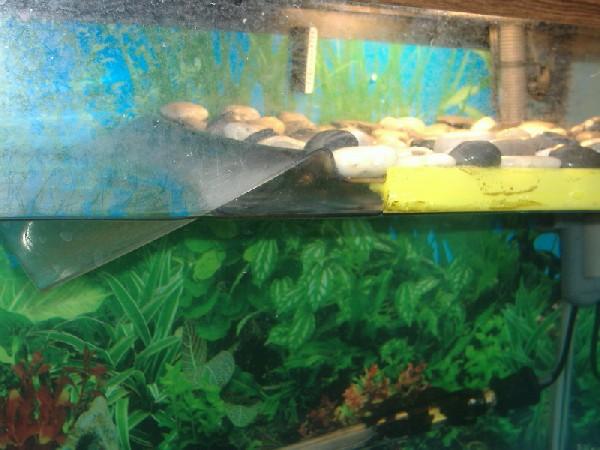 Used Cars Pensacola >> Kingsnake.com - Herpforum - RE: Plans for homemade turtle dock