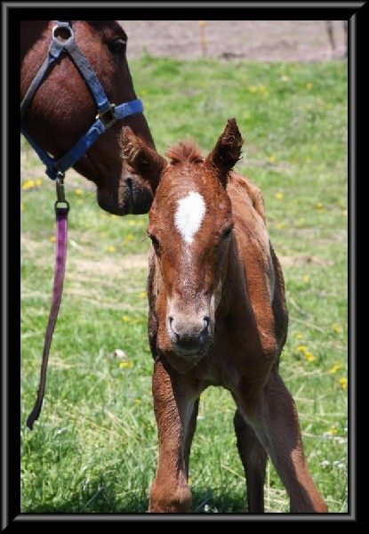 Zip's new filly
