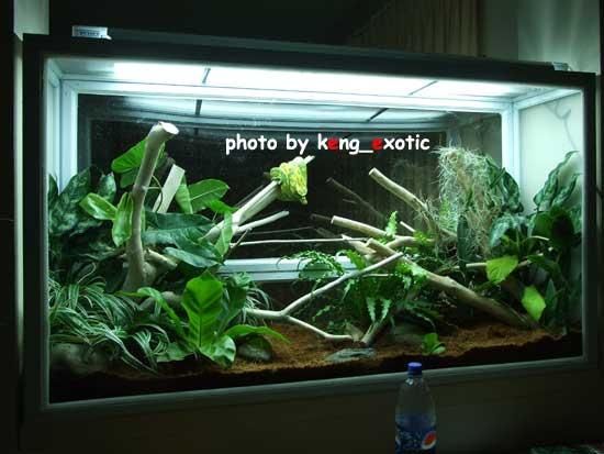 my green tree python terrarium