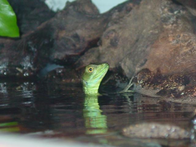 Pepe takin' a dip