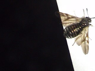 Another pic of the Mystery Insect-#4