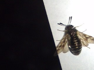 Another pic of Mystery insect-#3
