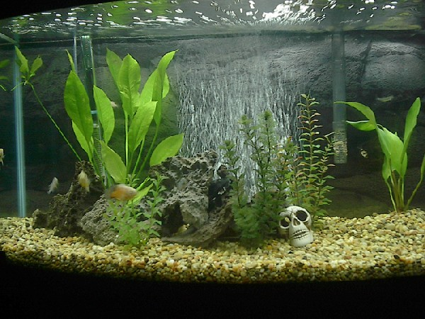 My New Aquarium