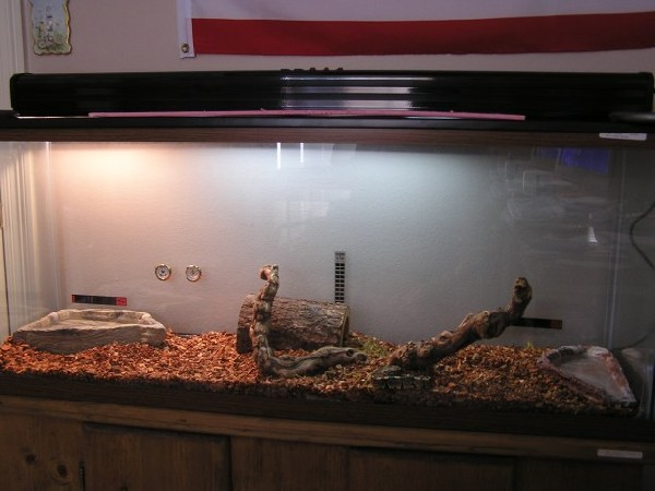 My ball python's cage